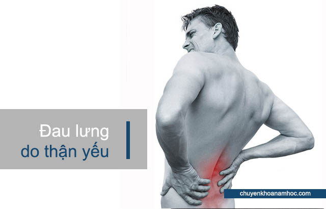 đau lưng do thận yếu