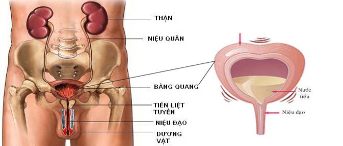 benh-viem-bang-quang-nguyen-nhan-va-cach-dieu-tri-1