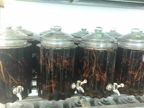 Mãnh lực Trường xuân tửu – Bình rượu ngâm sẵn của Trung tâm Thuốc dân tộc